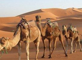 Rajasthan--splendour-tours